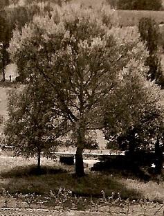 1960 LE GRAND TREMBLE.jpg