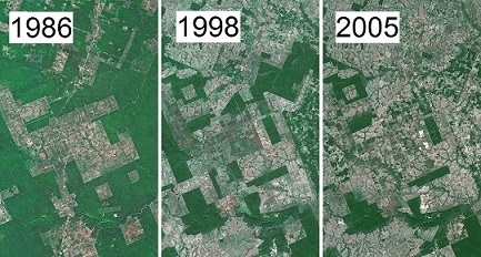 AMAZONIE 1986 1998 2005.jpg