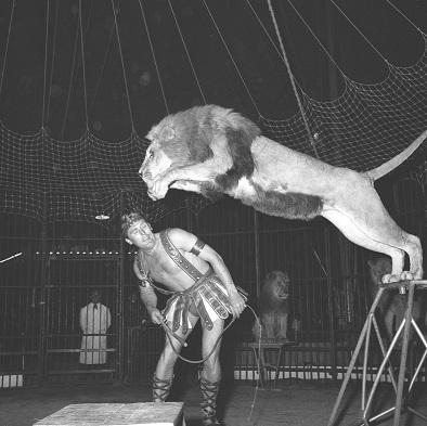 1 CIRQUE RANCY 1964 12 18 LION GVERMARD.jpg